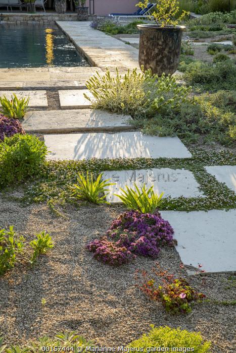 Phyla nodiflora between large paving stones by swimming pool, Iris lutescens, Geranium x cantabrigiense 'Karmina', Teucrium ackermannii, Sideritis cypria