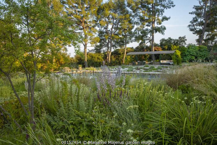 Wooden bench overlooking swimming pool in mediterranean gravel garden, Salvia sclarea var. turkestanica, achillea, Teucrium hircanicum