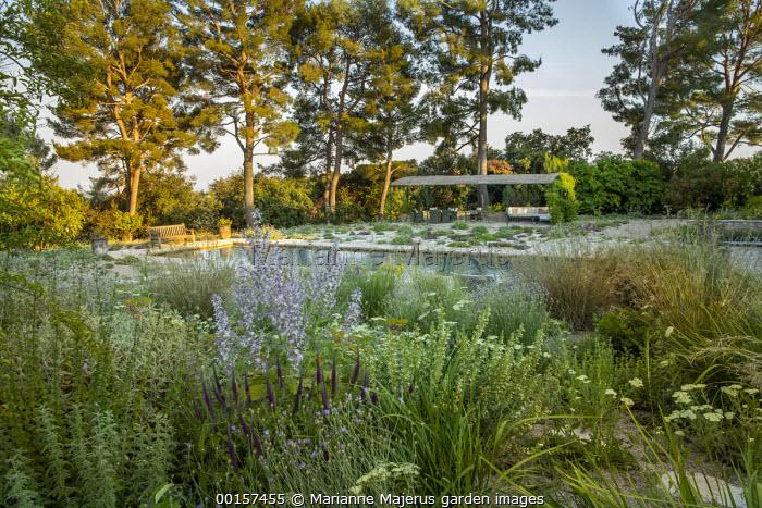 Wooden bench overlooking swimming pool in mediterranean gravel garden, Salvia sclarea var. turkestanica, achillea, outdoor sofas under gazebo, Teucrium hircanicum