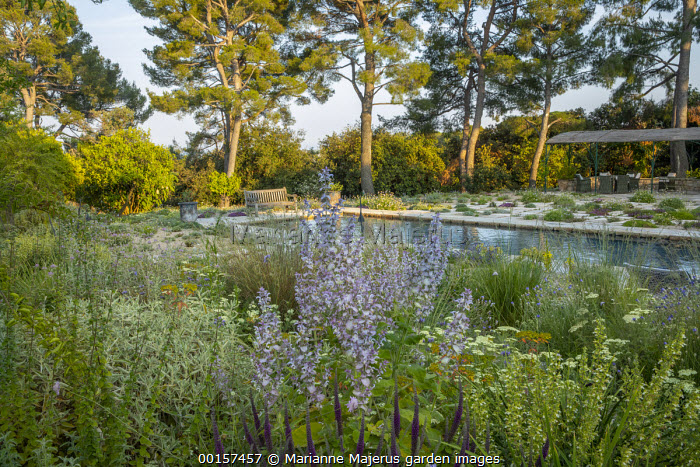 Wooden bench overlooking swimming pool in mediterranean gravel garden, Salvia sclarea var. turkestanica