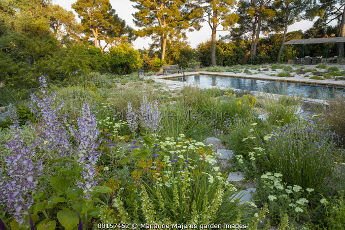 Wooden bench overlooking swimming pool in mediterranean gravel garden, Salvia sclarea var. turkestanica, achillea, outdoor sofas under gazebo