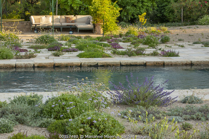 Alpines in gravel border and paving cracks around swimming pool, outdoor sofas