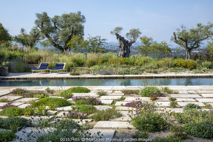 Chairs on swimming pool terrace, old olive trees