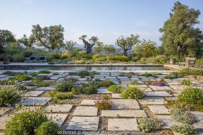 Wooden bench overlooking swimming pool in mediterranean gravel garden, alpines in paving cracks, Lomelosia hymettia