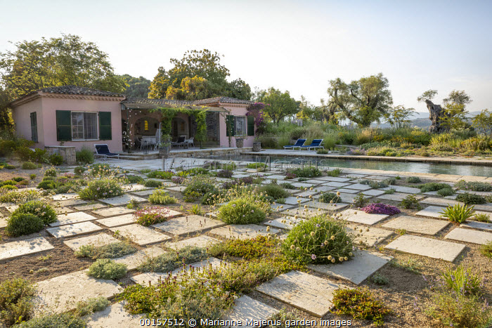 View across contemporary mediterranean gravel garden to recliner chairs by swimming pool, stone paving slabs, Lomelosia hymettia