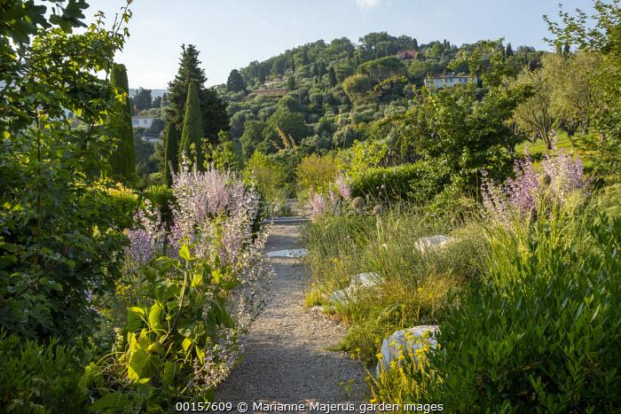 Gravel path through mediterranean garden, Salvia sclarea var. turkestanica