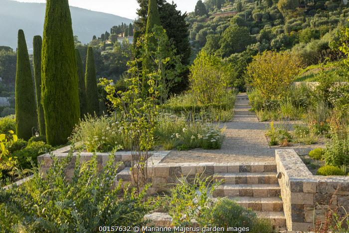 View across terraced hillside garden, stone retaining walls and steps, gravel paths, Cupressus sempervirens