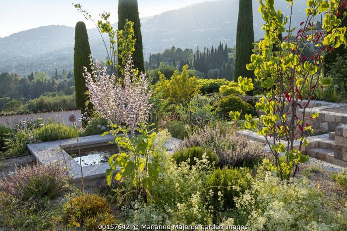 Terraces in mediterranean garden, Salvia sclarea var. turkestanica, Cupressus sempervirens