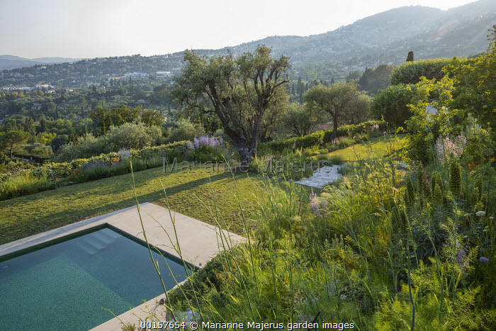 Terraced mediterranean garden, swimming pool, olive trees