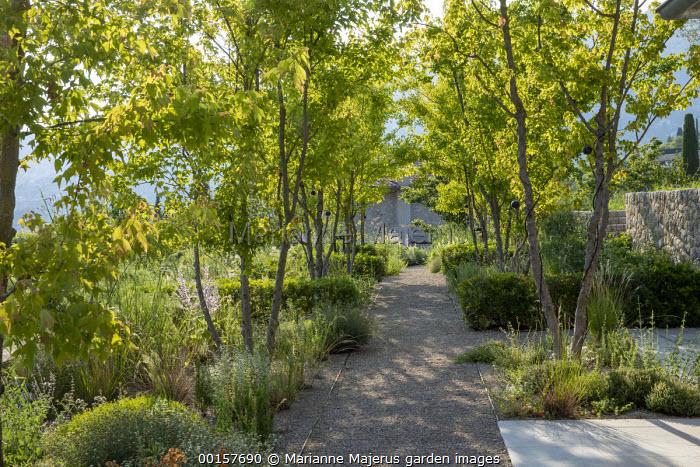 Gravel path through mediterranean garden, stone walls, dappled shade