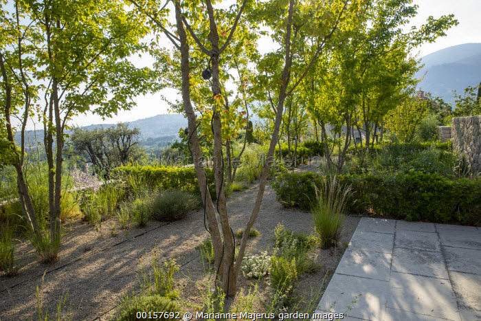 Gravel path through mediterranean garden, stone walls