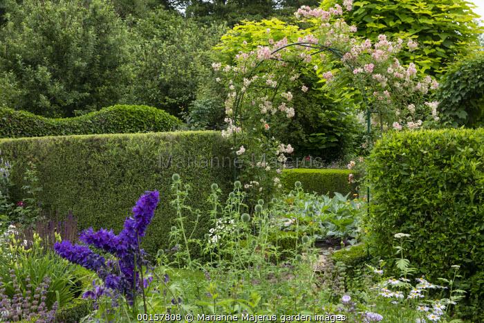 Rosa 'Phyllis Bide' climbing over metal arch, entrance to potager, garden 'room', delphinium, Echinops ritro