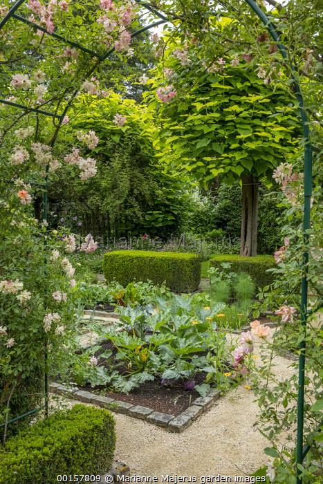 Rosa 'Phyllis Bide' climbing over metal arch, entrance to potager, garden 'room', stone border edging, courgette, Catalpa bignonioides