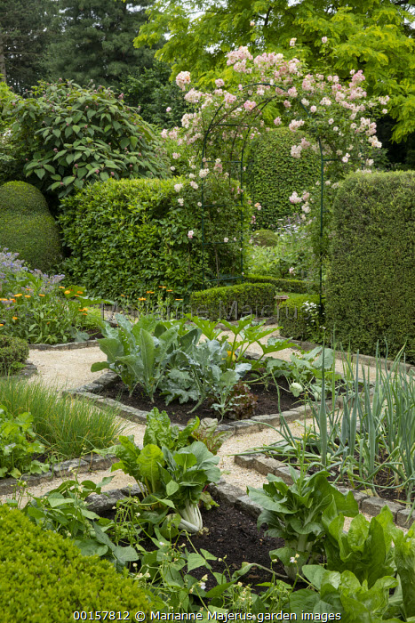 Rosa 'Phyllis Bide' climbing over metal arch, entrance to potager, garden 'room', stone border edging