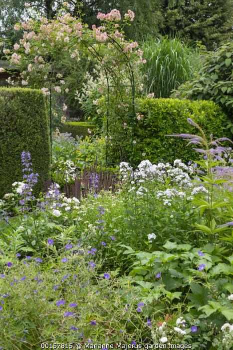 Rosa 'Phyllis Bide' archway in hedge, Phlox x arendsii 'Miss Jill', Geranium pratense, Veronicastrum virginicum 'Pointed Finger'