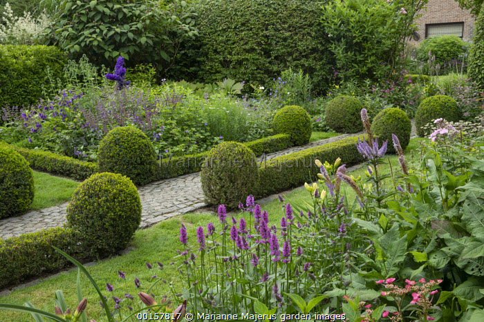 Stone sett path edged with low clipped box hedges and balls, Betonica officinalis 'Hummelo' syn. Stachys officinalis, Salvia verticillata 'Smouldering Torches'