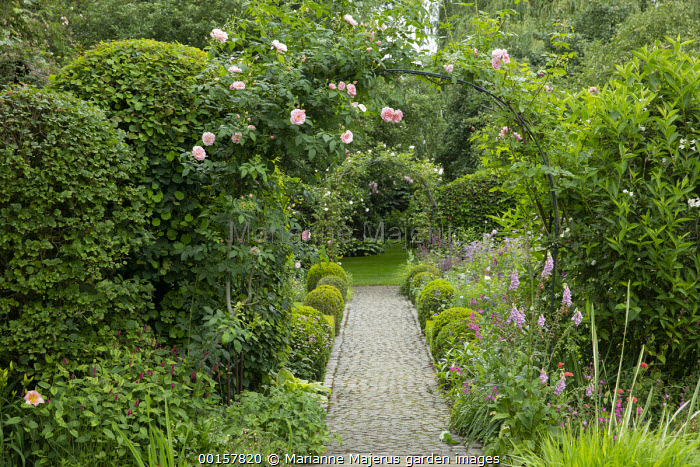 Rose arches with Rosa 'Kir Royal' and 'Camelot' over stone sett path edged with box balls, foxgloves