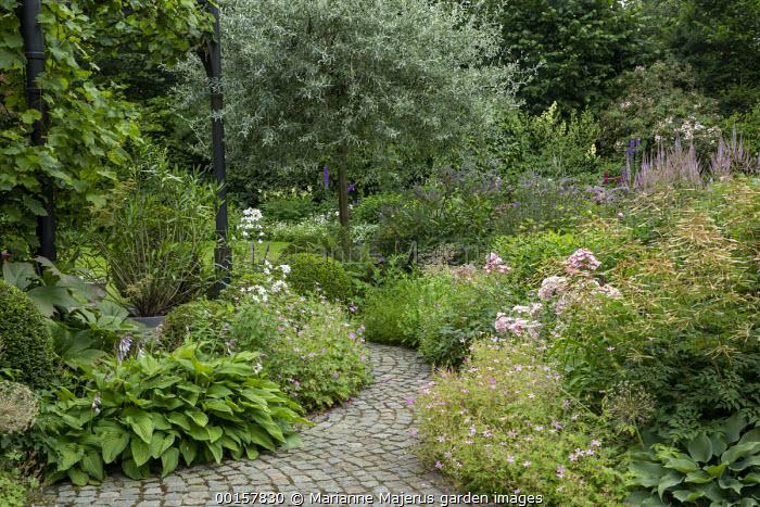 Stone sett path, Hosta fortunei var. albopicta, Geranium endressii, Rosa 'Ballerina', Aruncus 'Horatio'