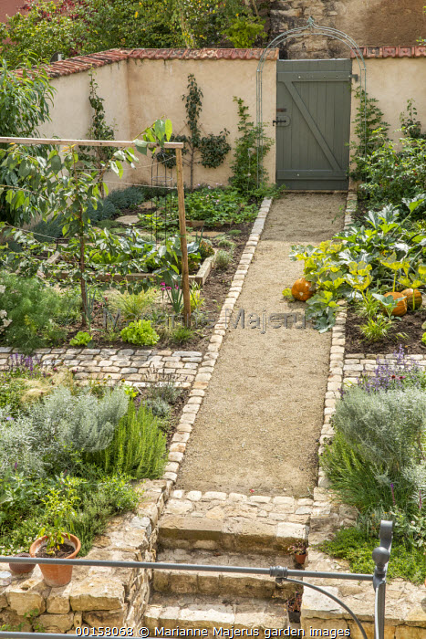 Path through walled potager to gate, pumpkin, trained fruit espaliers