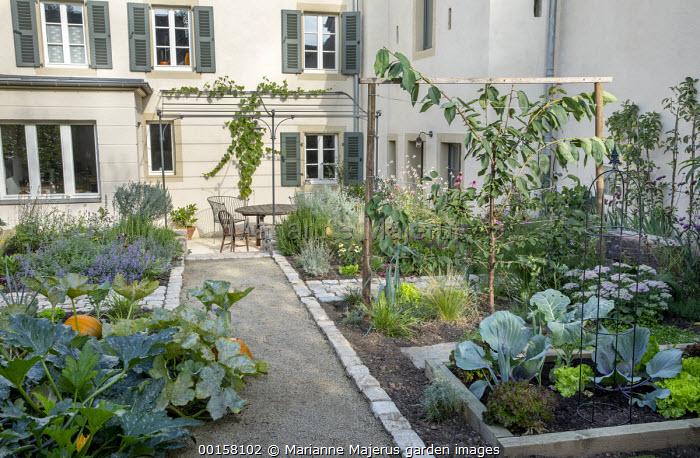 Path through walled potager, pumpkins, cabbages, lettuces, Gaura lindheimeri
