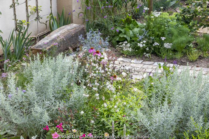 Stone path leading to rustic wooden bench, Echinacea purpurea, Gaura lindheimeri, Artemisia ludoviciana 'Silver Queen', eryngium