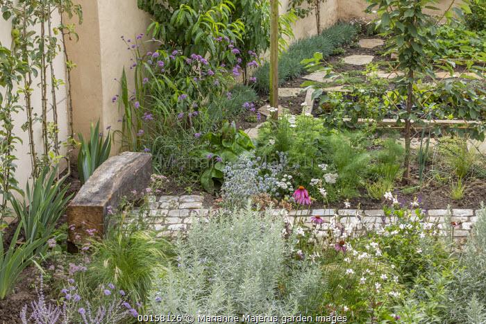 Stone path leading to rustic wooden bench, Artemisia ludoviciana 'Silver Queen', Gaura lindheimeri, Echinacea purpurea, Verbena bonariensis, Florence fennel, fruit espaliers