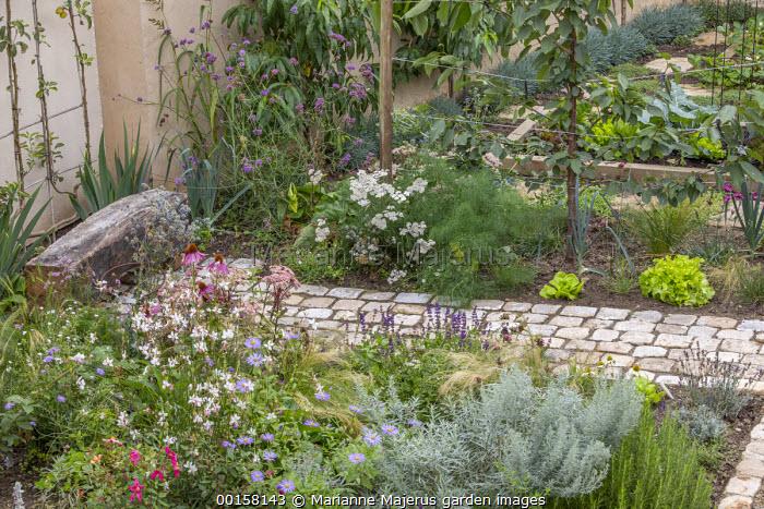 Stone path leading to rustic wooden bench, Echinacea purpurea, Gaura lindheimeri, Artemisia ludoviciana 'Silver Queen', eryngium, Stipa tenuissima, Florence fennel, achillea, Verbena bonariensis