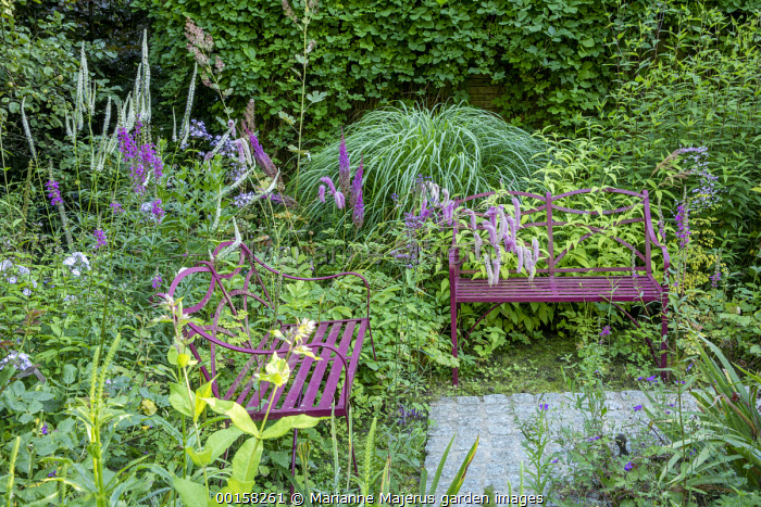 Burgundy benches in wild garden, Sanguisorba hakusanensis 'Lilac Squirrel', veronicastrum, Astilbe chinensis var. taquetii 'Purpurlanze'