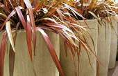 Phormium 'Rainbow Queen' in tall fibreglass containers