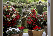 Containers on balcony, ivy garland, Christmas decorations