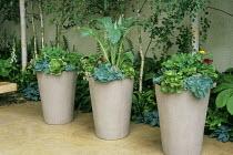 Echeveria, Cynara cardunculus in tall containers