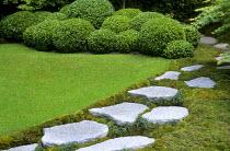 Stepping stone path, cloud-pruned Buxus microphylla 'Faulkner', granite boulders