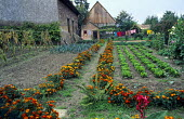 Vegetable garden, edging of French marigolds