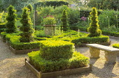 Formal area, box parterre, container with pelargonium, yew topiary spirals, stone bench