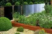 Row of box balls in tall acrylic containers, coriander in acrylic edged raised beds
