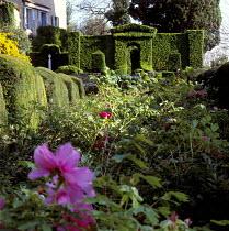 Clipped hedge in shape of portico, Paeonia suffruticosa