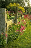 Driftwood fence, Centranthus ruber, cytisus
