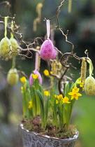 Narcissus 'Tête-à-tête', Corylus avellana 'Contorta', Easter egg decoration