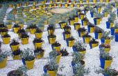 Blue and yellow painted pots on white gravel terraces