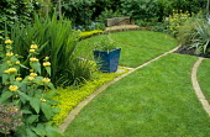 Phlomis russeliana, lawn, brick edging