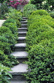 Stone steps with box hedge