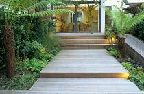 Stepped decking, tree ferns