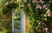 Rambling 'Rosa 'Blush Rambler', entrance to secret garden