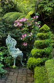 Spiral box topiary, chair, rhododendron, tree fern