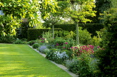 Lawn with mowing strip, border with Robinia pseudoacacia 'Umbraculifera', Veronica gentianoides, alliums