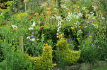 Topiary hens in kitchen garden, allium seedheads