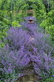 Path through drift of Nepeta 'Six Hills Giant' leading to fountain