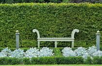 Hornbeam hedge, bench, box-edged bed with Senecio cineraria 'Silver Dust'
