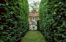 Hornbeam hedges, toolgate
