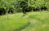 Mown path through long grass meadow with hooped metal edging, cherry trees